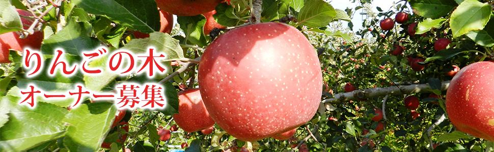 リンゴの木オーナー募集